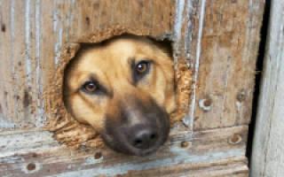 Как сделать дверцу для собаки в двери?