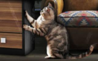 Как удалить царапины с лакированной мебели?