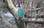 Чем обработать спил дерева?
